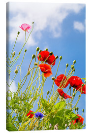 Lienzo  Poppies into the sky - Edith Albuschat