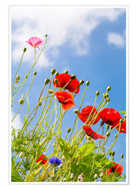 Póster Poppies into the sky