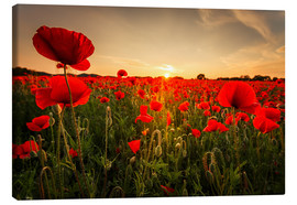 Lienzo  Poppy field with sunset - Oliver Henze