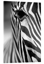 Metacrilato  face of a Grevy's zebra