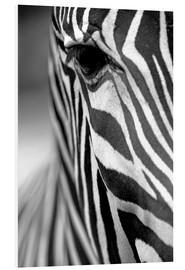 Forex  face of a Grevy's zebra