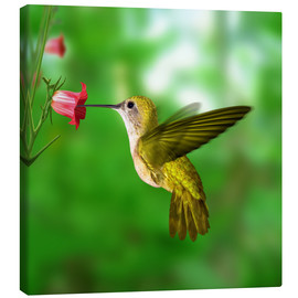 Lienzo  Hummingbird drinking nectar from flower