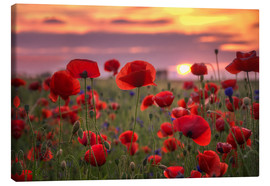 Lienzo  Poppies in sunset - Steffen Gierok