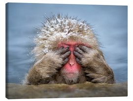 Lienzo  Japanese snow monkey in Jigokudani Monkey Park while bathing - Jan Christopher Becke