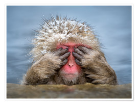 Póster  Japanese snow monkey in Jigokudani Monkey Park while bathing - Jan Christopher Becke