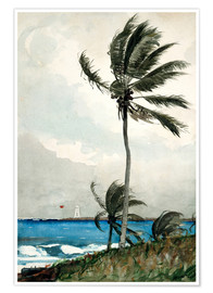 Póster Palm Tree, Nassau