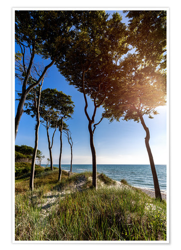 Póster Tall Trees at the Baltic Sea
