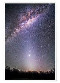 Póster  Venus in zodiacal light. - Alan Dyer