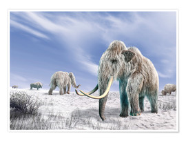 Póster Two Woolly Mammoths in a snow covered field with a few bison.