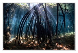 Póster  Beams of sunlight in a mangrove forest - Ethan Daniels