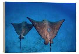 Cuadro de madera  Spotted eagle rays - Ethan Daniels