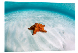 Cuadro de metacrilato  A West Indian starfish on the seafloor in Turneffe Atoll, Belize. - Ethan Daniels
