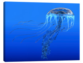 Lienzo  A blue spotted jellyfish illustration. - Corey Ford