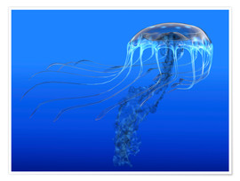 Póster  A blue spotted jellyfish illustration. - Corey Ford