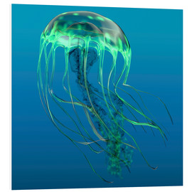 Forex  Green jellyfish illustration. - Corey Ford