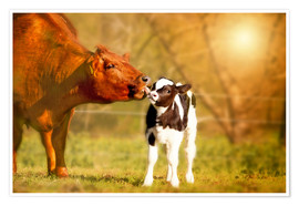 Póster  Cow and calf in the pasture - Monika Leirich