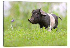 Lienzo  Little Baby Pig - WildlifePhotography