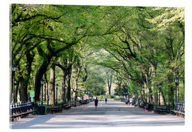 Cuadro de metacrilato  The Mall in spring, Central park, New York city, USA - Matteo Colombo