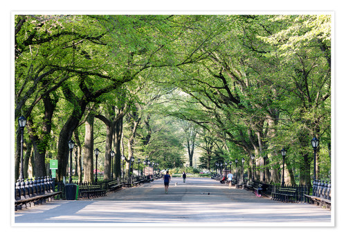 Póster The Mall in spring, Central park, New York city, USA