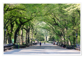 Póster  The Mall in spring, Central park, New York city, USA - Matteo Colombo