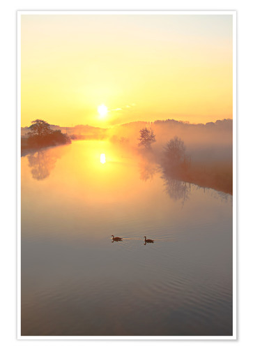Póster Geese in Sunrise