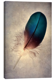 Lienzo  Blue parrot feather - Jaroslaw Blaminsky