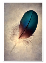 Póster Blue parrot feather