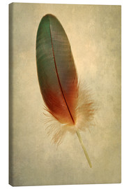 Lienzo  Green parrot feather - Jaroslaw Blaminsky