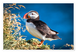 Póster Puffin on Iceland