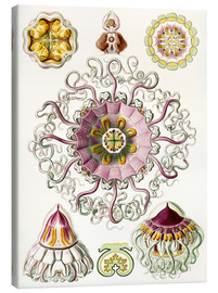 Lienzo  Crown quill, periphylla periphylla - Ernst Haeckel