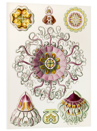 Forex  Crown quill, periphylla periphylla - Ernst Haeckel