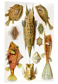Cuadro de metacrilato  Ostraciontes cowfish species - Ernst Haeckel