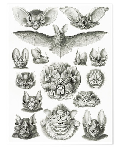 Póster Bats, heads and faces