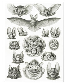 Póster  Bats, heads and faces - Ernst Haeckel