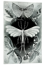 Metacrilato  Chart of moths - Ernst Haeckel