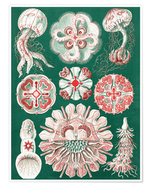 Póster  Chart of jellyfish species - Ernst Haeckel