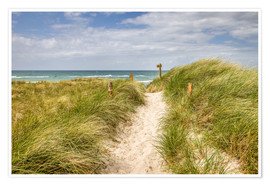 Póster Path in the dunes on the German Baltic Sea