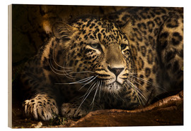 Cuadro de madera  Leopard on the lookout - Edith Albuschat