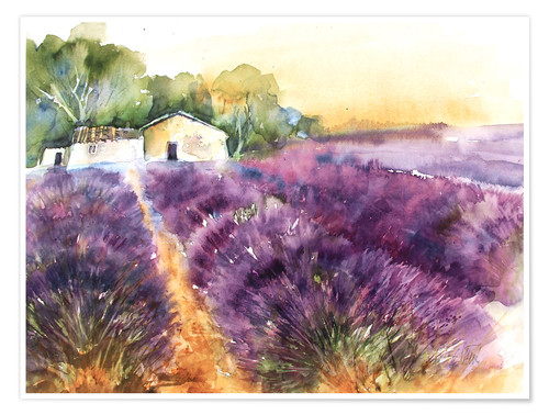 Póster Lavender field in Provence
