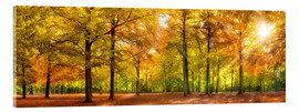 Metacrilato  Colorful autumn forest in sunlight - Jan Christopher Becke