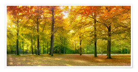 Póster Autumn Forest Panorama in sunlight