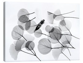 Lienzo  Ginkgo and bee