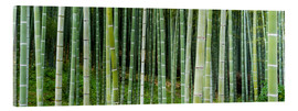Cuadro de metacrilato  Green bamboo forest in Kyoto, Japan - Jan Christopher Becke