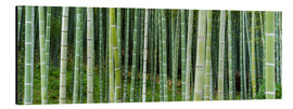 Cuadro de aluminio  Green bamboo forest in Kyoto, Japan - Jan Christopher Becke