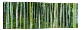 Lienzo  Green bamboo forest in Kyoto, Japan - Jan Christopher Becke