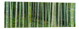 Cuadro de PVC  Green bamboo forest in Kyoto, Japan - Jan Christopher Becke