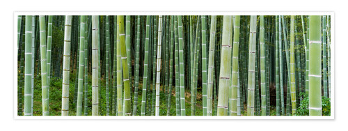 Póster Green bamboo forest in Kyoto, Japan