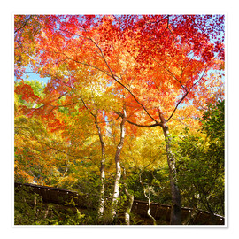 Póster Bright colors in the autumn forest