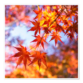 Póster Japanese ornamental maple in Kyoto, Japan