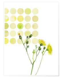 Póster Field Sowthistle in dots